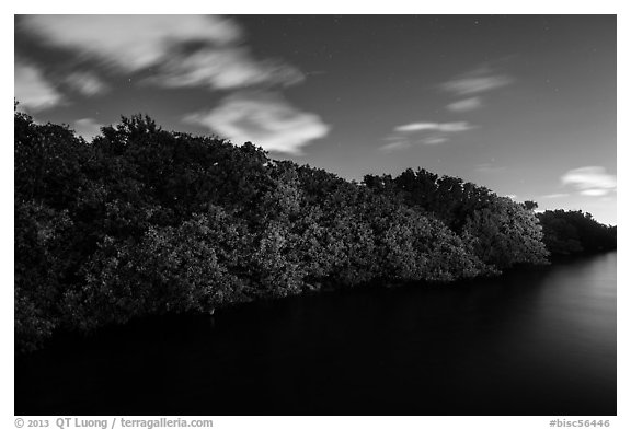 Row of mangroves trees at night, Convoy Point. Biscayne National Park (black and white)