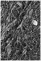 Beached seagrass, mangrove leaves, and gravel. Biscayne National Park ( black and white)