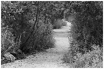 Trail, Convoy Point. Biscayne National Park ( black and white)