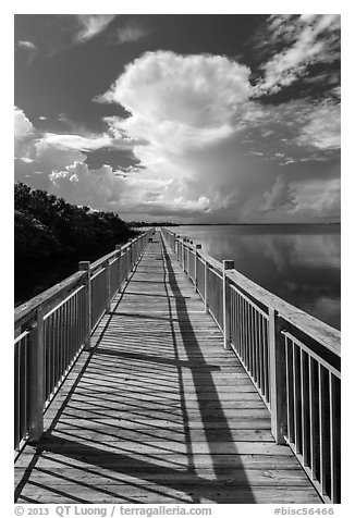 Boardwalk and Biscayne Bay, Convoy Point. Biscayne National Park (black and white)