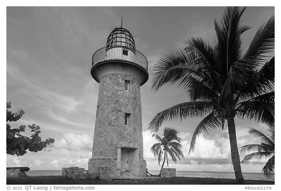 Palm tree and lighthouse, Boca Chita Key. Biscayne National Park (black and white)