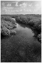 Creek. Biscayne National Park ( black and white)
