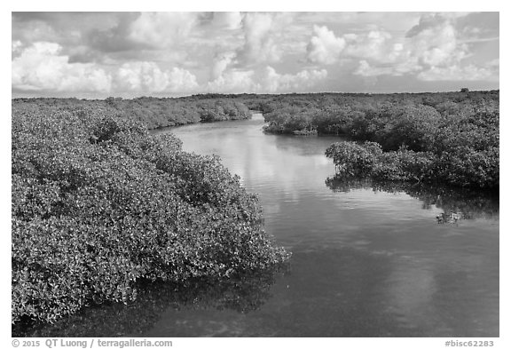 Narrow creek. Biscayne National Park (black and white)