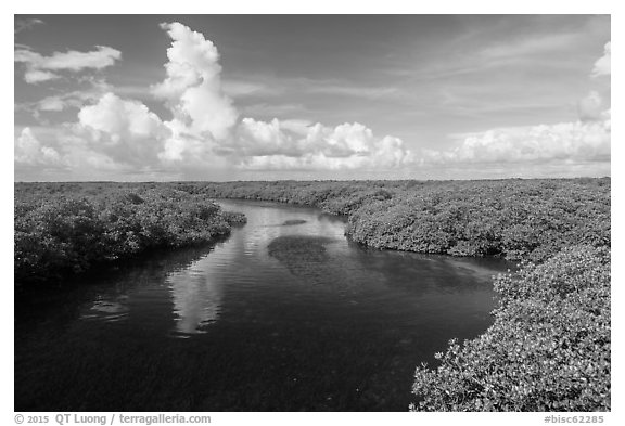 Narrow channel lined with mangroves. Biscayne National Park (black and white)