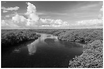 Narrow channel lined with mangroves. Biscayne National Park ( black and white)