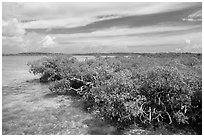 Clear water and mangoves, Linderman Key. Biscayne National Park ( black and white)
