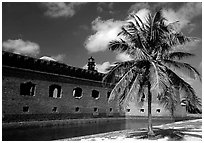 Palm tree and Fort Jefferson. Dry Tortugas National Park ( black and white)
