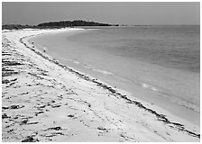 Beach on Bush Key with beached seaweed. Dry Tortugas National Park ( black and white)