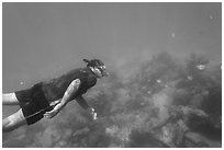 Free diver swimming amidst fish and coral. Dry Tortugas National Park ( black and white)