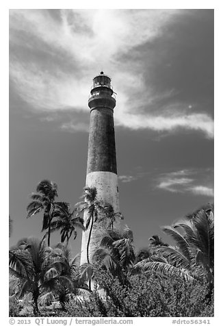 Palm trees and Dry Tortugas Light Station, Loggerhead Key. Dry Tortugas National Park (black and white)