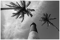 Looking up palm trees and Loggerhead Lighthouse. Dry Tortugas National Park ( black and white)