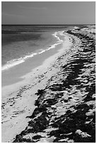 Beached seagrass and shoreline, Loggerhead Key. Dry Tortugas National Park ( black and white)