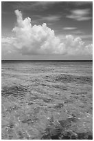 Reef and tropical clouds. Dry Tortugas National Park ( black and white)