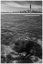 Coral head and Loggerhead Key lighthouse. Dry Tortugas National Park ( black and white)
