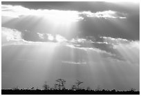 Cypress and sun rays, sunrise, near Pa-hay-okee. Everglades National Park ( black and white)