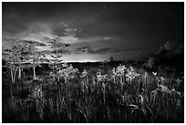 Dwarf cypress at night, Pa-hay-okee. Everglades National Park ( black and white)