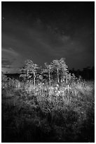 Dwarf cypress and stars at night, Pa-hay-okee. Everglades National Park ( black and white)