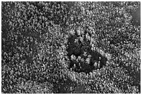 Aerial view of a cypress hole. Everglades National Park ( black and white)
