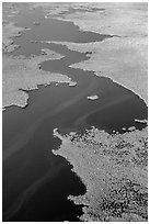Aerial view of dense mangrove coastline and inlets. Everglades National Park, Florida, USA. (black and white)