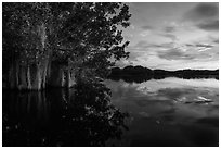 Trees with Spanish Moss in Paurotis Pond at sunset. Everglades National Park ( black and white)