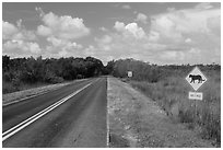 Road with Florida Panther sign. Everglades National Park, Florida, USA. (black and white)