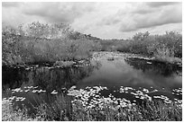 Freshwater slough in summer. Everglades National Park ( black and white)