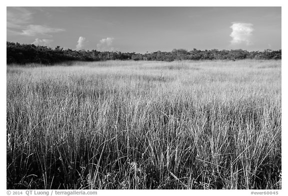 Prairie and hammocks, Shark Valley. Everglades National Park (black and white)