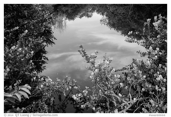 Pond surrounded by vegetation, Shark Valley. Everglades National Park (black and white)