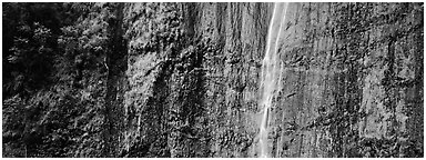 Verdant cliff with tropical waterfall. Haleakala National Park (Panoramic black and white)