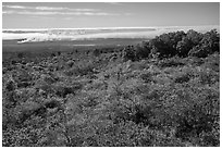 Mauna Loa forested slope and Halemaumau summit. Hawaii Volcanoes National Park ( black and white)