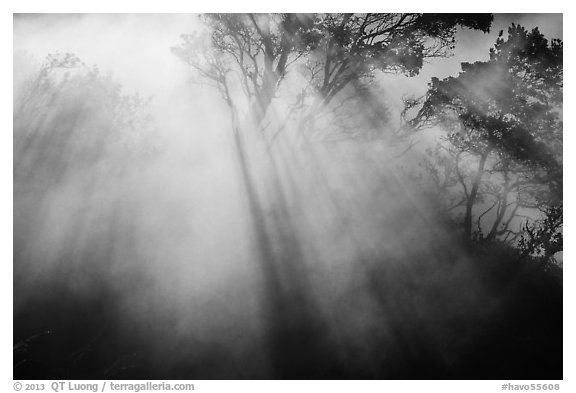 Backlit trees and sun rays in thermal steam. Hawaii Volcanoes National Park (black and white)