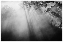 Backlit trees and sun rays in thermal steam. Hawaii Volcanoes National Park ( black and white)