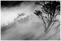Trees and volcanic steam, Steaming Bluff. Hawaii Volcanoes National Park, Hawaii, USA. (black and white)