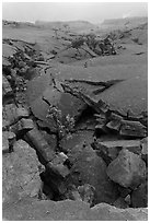 Fractured Kilauea Iki crater floor. Hawaii Volcanoes National Park, Hawaii, USA. (black and white)