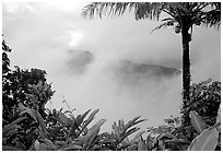 Clearing clouds from Mont Alava, Tutuila Island. National Park of American Samoa (black and white)