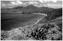 Agaves on Ram Head. Virgin Islands National Park ( black and white)