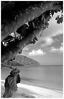 Noni tree (Morinda citrifolia) and beach, Maho Bay. Virgin Islands National Park, US Virgin Islands. (black and white)
