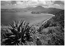 Agaves and cactus, and turquoise waters, Ram Head. Virgin Islands National Park ( black and white)