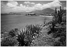 Agave and tropical turquoise waters on Ram Head. Virgin Islands National Park ( black and white)