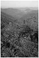 Bougainvillea flowers and view from ridge. Virgin Islands National Park ( black and white)