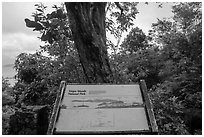 Tree obscuring view, interpretive sign. Virgin Islands National Park ( black and white)
