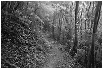 Reef Bay trail. Virgin Islands National Park ( black and white)
