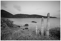 Cactus, Great Lameshur Bay from Yawzi Point. Virgin Islands National Park ( black and white)