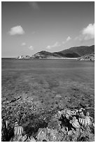 Turk cap cactus and turquoise waters, Little Lameshur Bay. Virgin Islands National Park ( black and white)