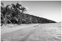 Clear waters and palm trees in the evening, Salomon Beach. Virgin Islands National Park ( black and white)