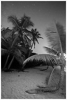 Palm trees on beach at night, Salomon Beach. Virgin Islands National Park ( black and white)