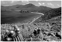 Cactus and bay, Ram Head. Virgin Islands National Park ( black and white)