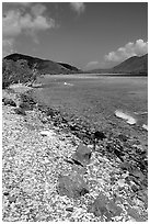 Shore and Turquoise waters, Leinster Bay. Virgin Islands National Park ( black and white)