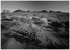Pink sand dunes and Olgas. Olgas, Uluru-Kata Tjuta National Park, Northern Territories, Australia ( black and white)