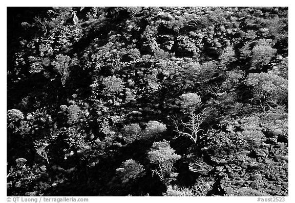 Kings Canyon slopes, Watarrka National Park. Northern Territories, Australia (black and white)